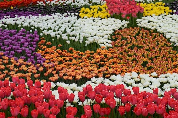 Kwiatowy dywan